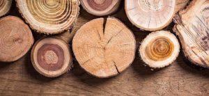 Tronçons de bois